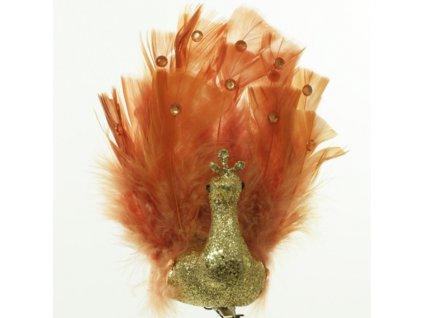 páv zlatý štipec