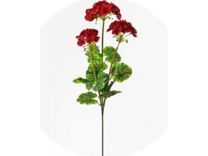 muškat červený 70cm