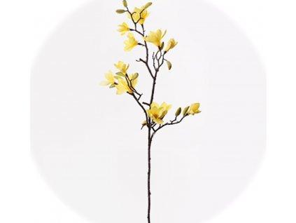 9200237 magnolia konar 155cm